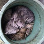 バケツ猫とダンボール猫