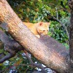 猫も木にのぼる